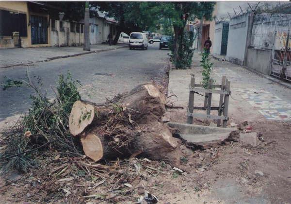 zersägter Baum