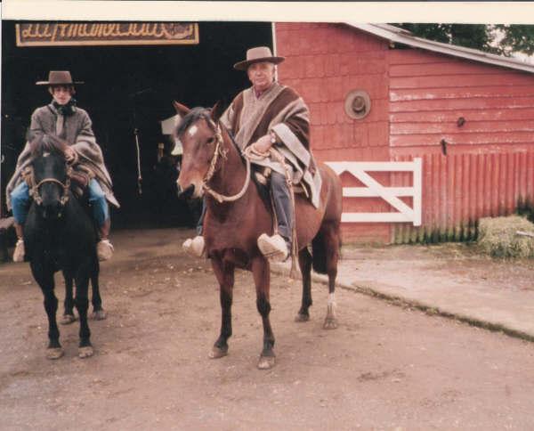 pferde12.JPG