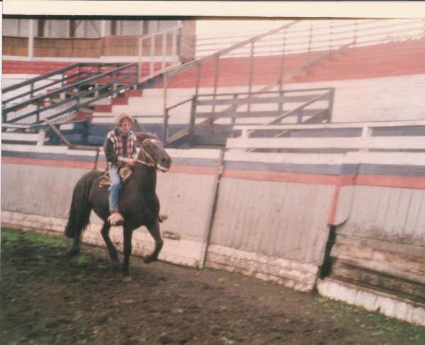 pferde13.JPG