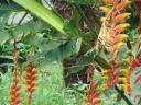 flor-nacional-achic-27-04-2010.jpg